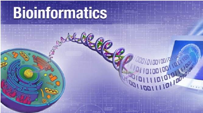 Bioinfomatics Assignment Help in India