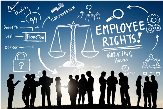 Employment law assignment help in India